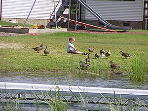 child near ducks and geese at wishbone resort